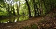 Klima se mění. Česko bude vhodnější pro pěstování lanýžů, tvrdí experti - anotační foto