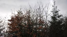 Podzimní den