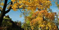 Jaký bude letošní podzim? Meteorologové vydali dlouhodobou předpověď - anotační obrázek