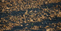 Zemědělci, které postihlo sucho, dostanou dalších 600 milionů korun - anotační obrázek