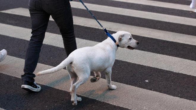 Pes, ilustrační fotografie
