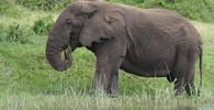 Namibie prodá v aukci 170 slonů, nabídky lze podávat do konce ledna - anotační obrázek