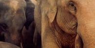 VIDEO: Na známého biologa zaútočil slon. Útok zachytil na kameru - anotační obrázek