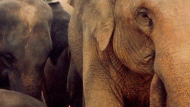 Sloni, ilustrační fotografie
