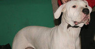 Stařenku s chodítkem (+91) rozsápala doga: Žena zemřela, hlavu jí pes děsivě pokousal - anotační obrázek