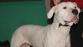Stařenku s chodítkem (+91) rozsápala doga: Žena zemřela, hlavu jí pes děsivě pokousal - anotační foto