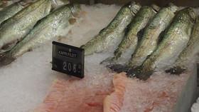 Prodej mražených ryb