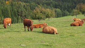 Zemědělství, ilustrační fotografie