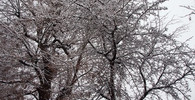 Předpověď počasí na noc a středu 13. prosince - anotační obrázek