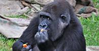Opice už nebudou nejchytřejší zvířata na Zemi. Kdo je předběhne? - anotační obrázek