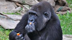 Opice už nebudou nejchytřejší zvířata na Zemi. Kdo je předběhne? - anotační foto