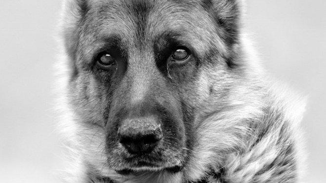 Psi, ilustrační fotografie