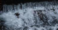 Další otrava Bečvy. Do řeky opět unikla toxická látka, ryby hynou - anotační foto