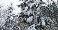Předpověď počasí na noc a pondělí 19. února - anotační obrázek