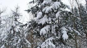 Zimní počasí udeří naplno: Česko zasype sníh. Výstraha rozšířena - anotační foto