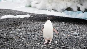 Tučňák, ilustrační foto.
