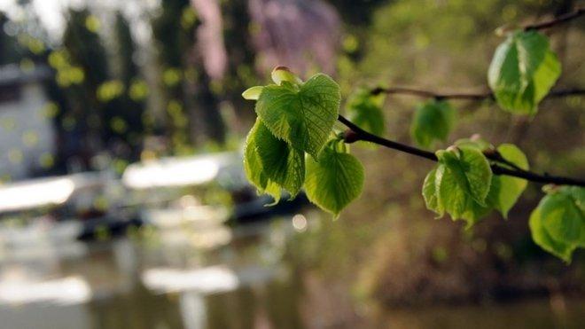 Zámek Lednice, jaro