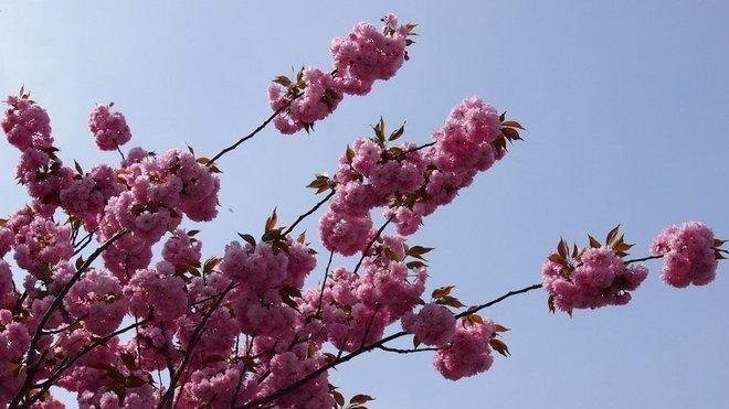 Jaro je tady! Ilustrační fotografie