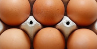 Kontaminovaná vejce skončila na Slovensku v bratislavských hotelech - anotační obrázek