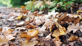Podzim je tu. Jaké počasí nás čeká? Podívejte se na předpověď - anotační foto