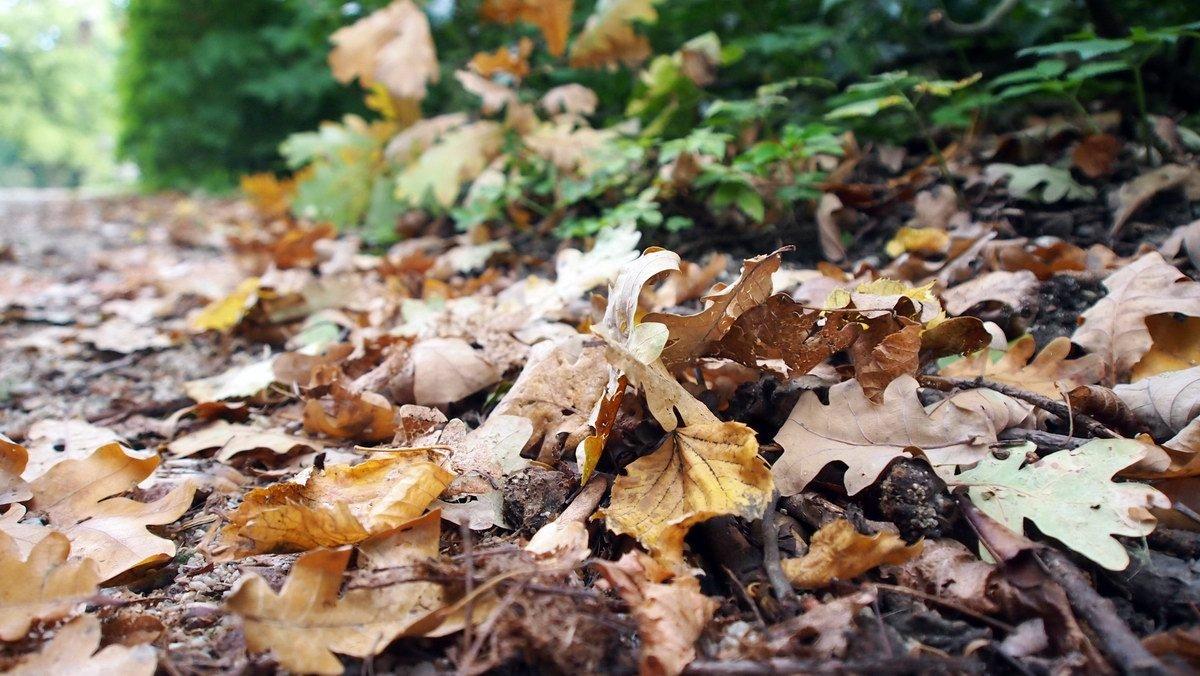 Podzim je tu. Jaké počasí nás čeká? Podívejte se na předpověď - anotační obrázek