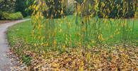 Předpověď počasí na noc a středu 25. října - anotační obrázek
