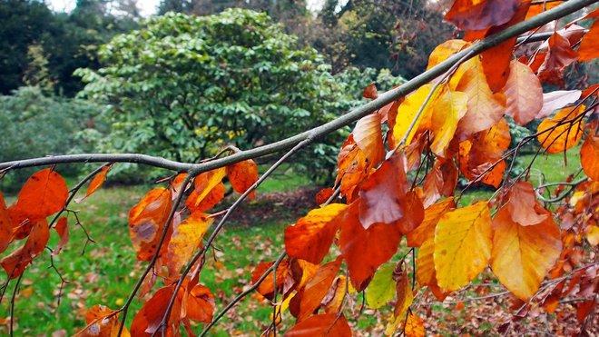 Podzimní příroda, ilustrační fotografie
