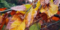 Současné teploty vydrží, v listopadu přijde zlom - anotační obrázek