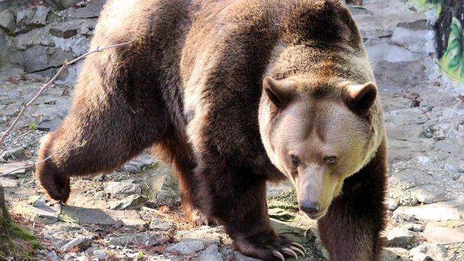 Nepřibližujte se v Beskydech k medvědům