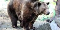 Vědci zjistili, proč vyhynuli jeskynní medvědy. Vyhubila je veganská strava - anotační obrázek