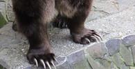 Kraj chce nechat zastřelit medvěda na Zlínsku - anotační obrázek