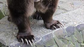 Zoo Bratislava, Medvěd hnědý