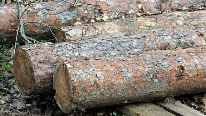 Těžba dřeva, ilustrační fotografie