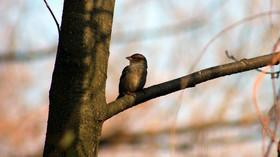 Jarní příroda, ilustrační fotografie