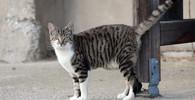 Kočka, kterou doma nechcete: 7 pitbulů skončilo u veterináře, panička v nemocnici - anotační obrázek