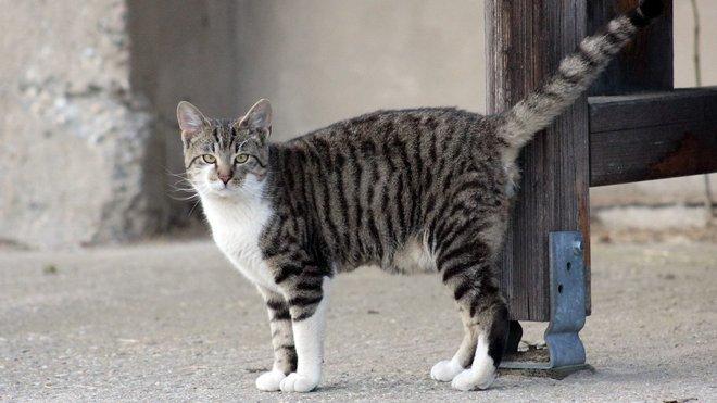 Zoo Bratislava, kočka
