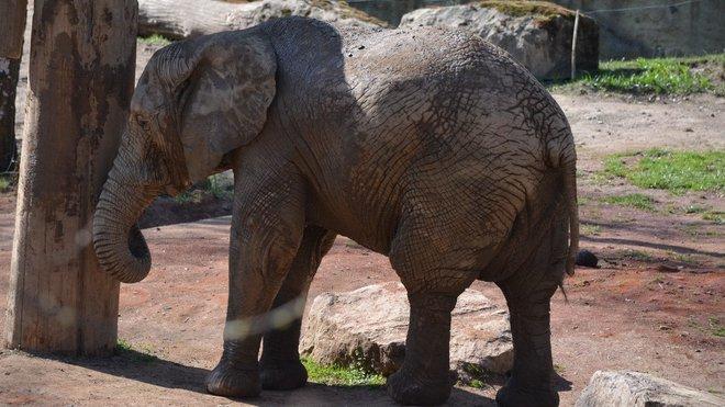 Zoo v Lešné u Zlína, sloní výběh