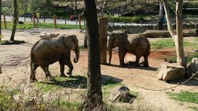 Zoo Lešná u Zlína, sloní výběh