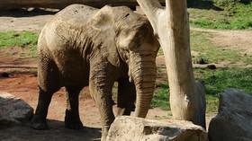 Slon, ilustrační fotografie.