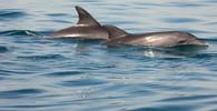 Delfíni, ilustrační fotografie