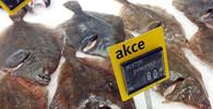 Riziko pro naše zdraví? Tři čtvrtiny mořských ryb v sobě mají plasty - anotační foto