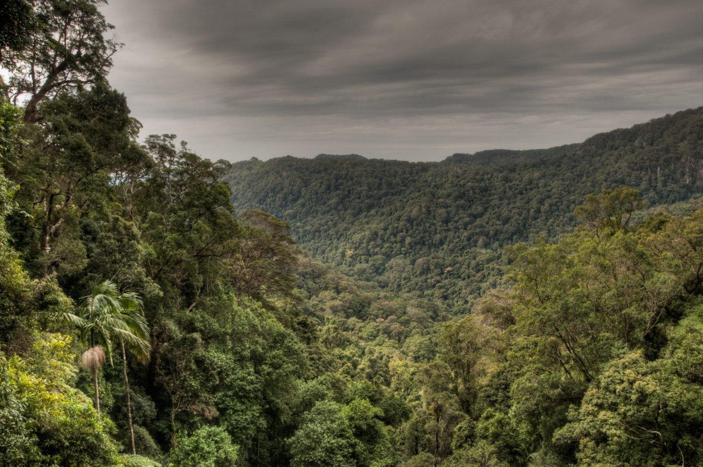 Amazonský prales, ilustrační fotografie
