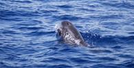 Velryby, ilustrační fotografie