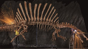 Jak vypadal a lovil predátor Spinosaurus? Tohle překonává nejdivočejší fantazie - anotační foto
