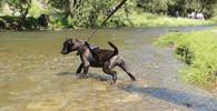 Pes u Tišnova vážně pokousal malou holčičku, zranil také matku - anotační obrázek