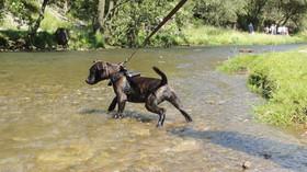 Pes se stal hvězdou internetu, zachránil koloucha před utonutím - anotační foto