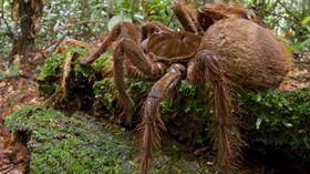Vědec objevil obřího pavouka, Ilustrační fotografie