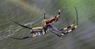 Bojíte se pavouků? Odborníci přišli na trik, kterým vás zbaví strachu - anotační obrázek