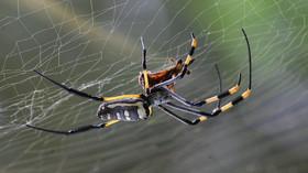 Zabíjíte doma pavouky? Experti varují, neměli byste to dělat - anotační foto