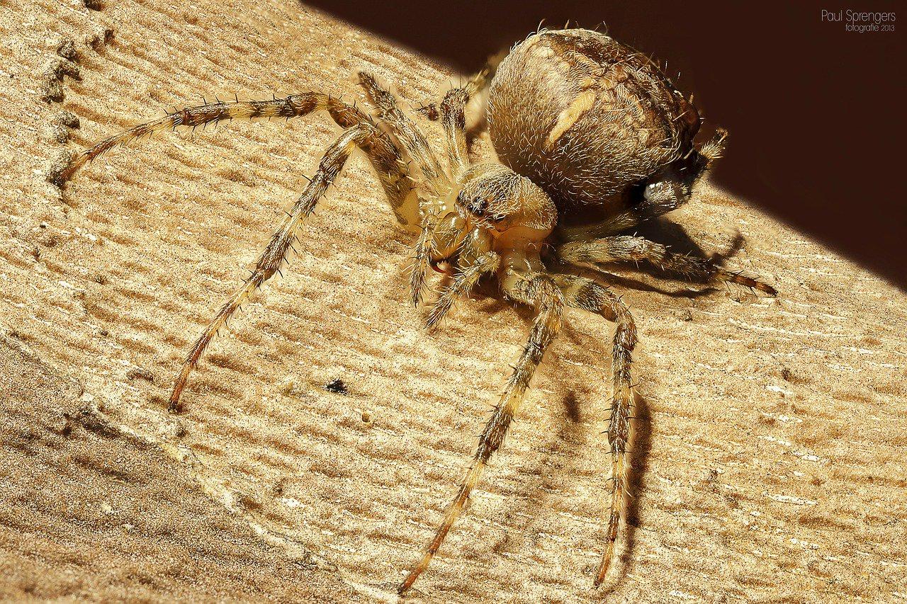 Máte strach z pavouků? Díky tomuto triku se ho můžete zbavit jednou provždy - anotační obrázek